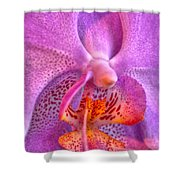 001 Orchid Summer Show Buffalo Botanical Gardens Series Shower Curtain