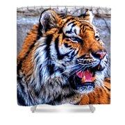 001 Siberian Tiger  Shower Curtain