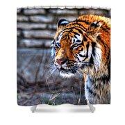 0010 Siberian Tiger Shower Curtain