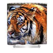 0011 Siberian Tiger Shower Curtain