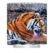 0014 Siberian Tiger Shower Curtain