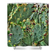002 For The Cactus Lover In You Buffalo Botanical Gardens Series Shower Curtain
