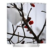 002 Frozen Berries Shower Curtain
