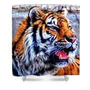002 Siberian Tiger Shower Curtain