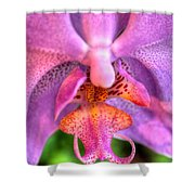 003 Orchid Summer Show Buffalo Botanical Gardens Series Shower Curtain