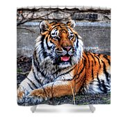 003 Siberian Tiger Shower Curtain