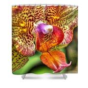 004 Orchid Summer Show Buffalo Botanical Gardens Series Shower Curtain