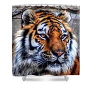 004 Siberian Tiger Shower Curtain