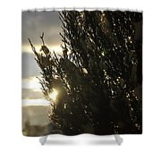 005 Peaking Winter Sunrise Shower Curtain