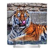 006 Siberian Tiger Shower Curtain
