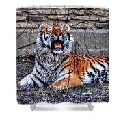 007 Siberian Tiger Shower Curtain