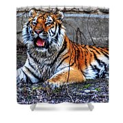 008 Siberian Tiger Shower Curtain