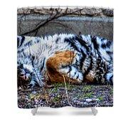 009 Siberian Tiger Wubb Me Bellwee Poweesh Shower Curtain
