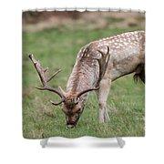 01 Fallow Deer Shower Curtain