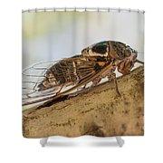 01 New Forest Cicada  Shower Curtain