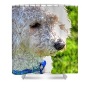 01 Portriat Of Wizard   Pet Series Shower Curtain