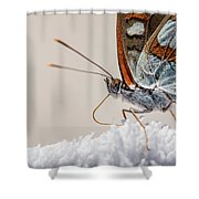 01 Southern White Admiral Butterfly Close Up Shower Curtain