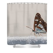 01 Southern White Admiral Butterfly Shower Curtain