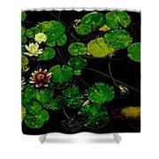 0148-lily -   Pastel Chalk 1 Sl Shower Curtain