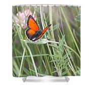 02 Balkan Copper Butterfly Shower Curtain