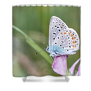 02 Common Blue Butterfly Shower Curtain