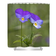 02 Heart's Ease Wild Viola Shower Curtain