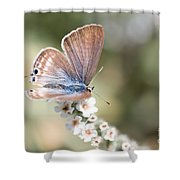 02 Long-tailed Blue Butterfly Shower Curtain