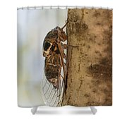02 New Forest Cicada  Shower Curtain
