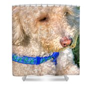 02 Portriat Of Wizard   Pet Series Shower Curtain