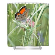 03 Balkan Copper Butterfly Shower Curtain