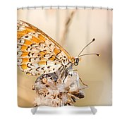 03 Lesser Spotted Fritillary Shower Curtain
