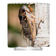 03 New Forest Cicada  Shower Curtain