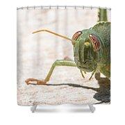 04 Egyptian Locust Grasshopper Shower Curtain