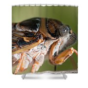 04 New Forest Cicada  Shower Curtain