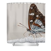 04 Southern White Admiral Butterfly Shower Curtain