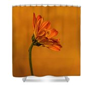 055 Shower Curtain