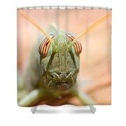06 Egyptian Locust Grasshopper Shower Curtain