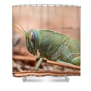 08 Egyptian Locust Grasshopper Shower Curtain