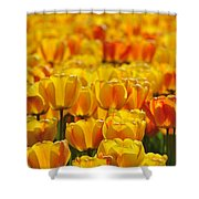 090416p026 Shower Curtain
