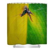 Hole Shower Curtain
