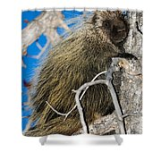 North American Porcupine Shower Curtain