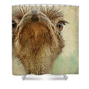 Ostrich Closeup Shower Curtain