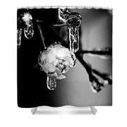 Rose And Frozen Leafs In Cold Winter Tones Shower Curtain