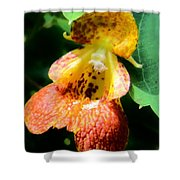 Spotted Jewelweed Shower Curtain