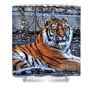 0013 Siberian Tiger Shower Curtain
