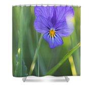 01 Heart's Ease Wild Viola Shower Curtain