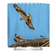 3 Ospreys At The Nest Shower Curtain