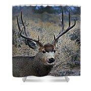 4x4 Mule Deer Buck   #7714 Shower Curtain