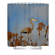 7- Great Blue Heron Shower Curtain