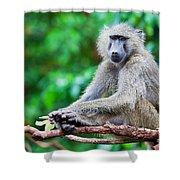 A Baboon In African Bush Shower Curtain